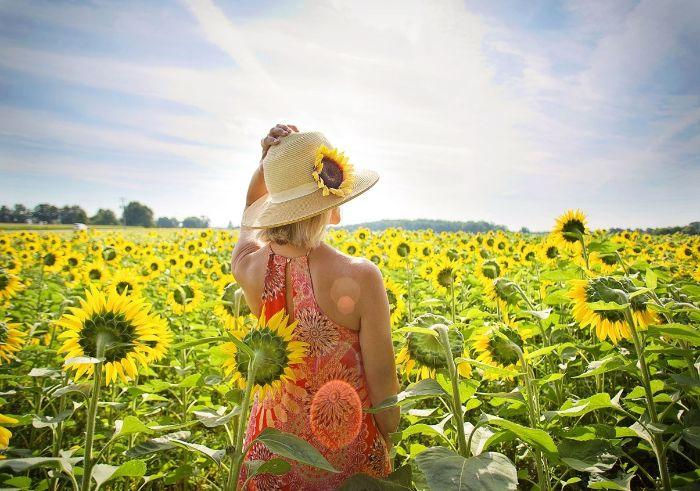 Nằm mộng thấy thấy cô gái chụp ảnh với đồng hoa hướng dương