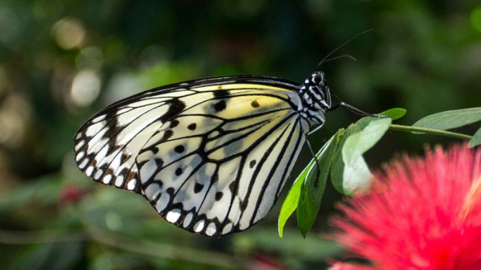 Luận giải mơ thấy bướm đánh con gì có thể phát tài?