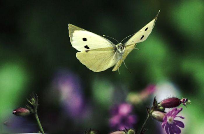 Mơ thấy bướm bay vào nhà đánh số mấy?
