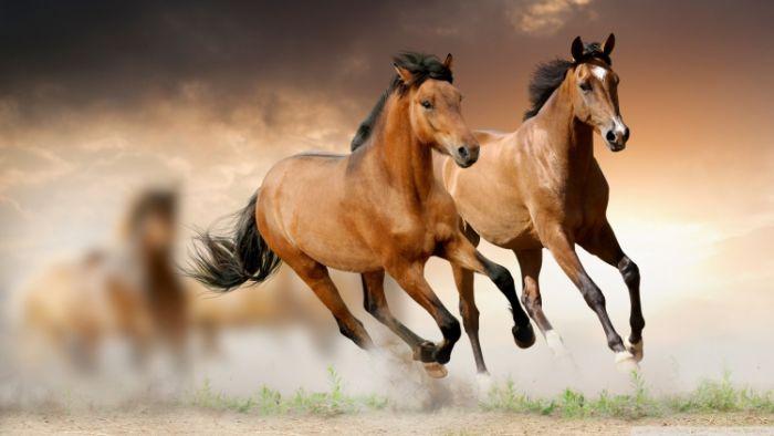 Nằm mơ thấy ngựa đang chạy thì đừng bỏ lỡ con số may mắn 01 - 24 - 44.