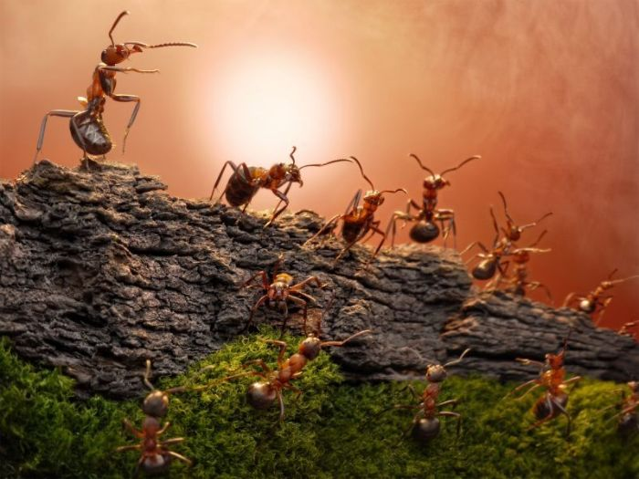 Chiêm bao đàn kiến đang xây tổ trong nhà mình