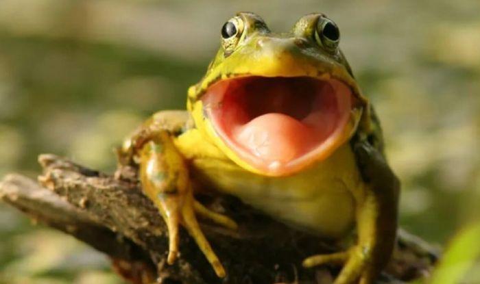 Mộng thấy tiếng ếch kêu mang ý nghĩa không may mắn cho chủ nhân của nó