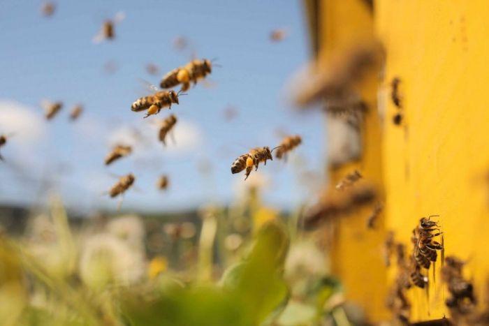 Nếu trong mơ bạn nhìn thấy ong bay vào nhà mình làm tổ thì hãy vui vẻ lên nhé