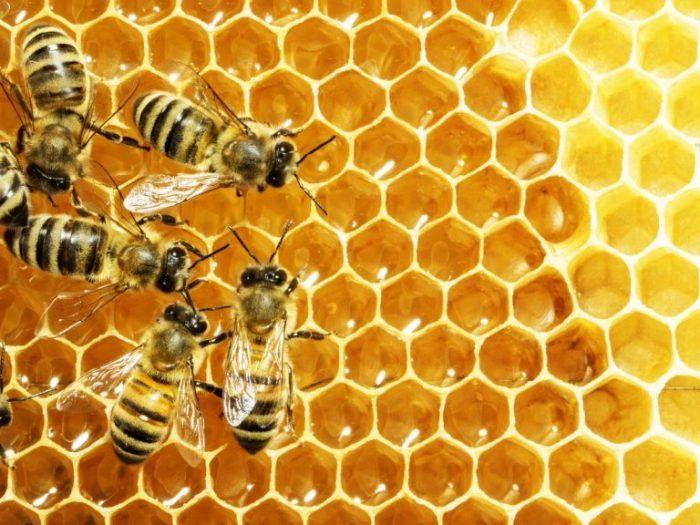 Ý nghĩa của giấc mơ thấy con ong là gì?
