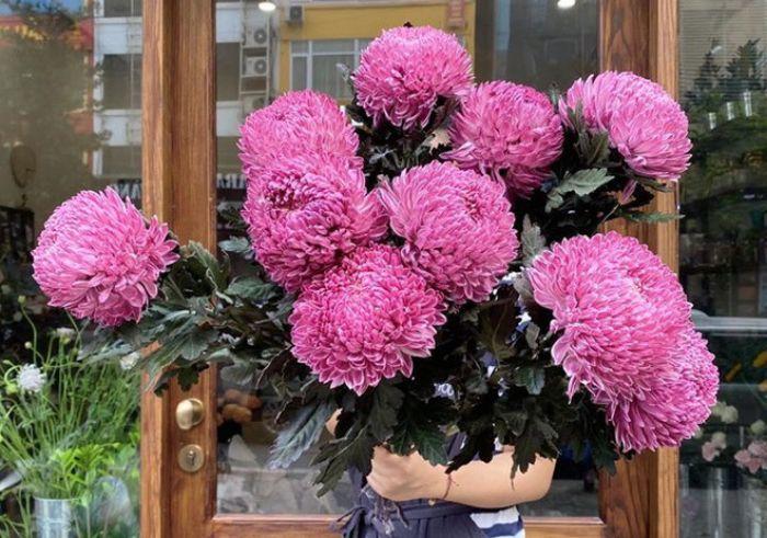 Mộng thấy bó hoa cúc khổng lồ chọn ngay các số 57 - 44 - 39
