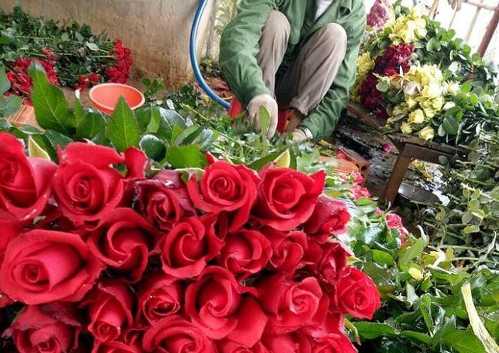 Mơ thấy hoa hồng điềm lành hay dữ? Đánh con gì?