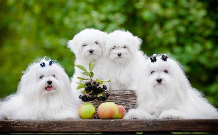 Nằm mơ thấy chó trắng là điềm báo gì?