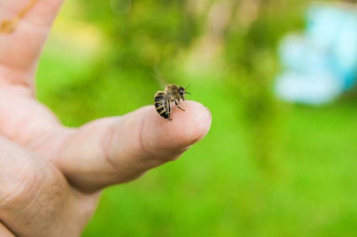 Nằm mộng thấy ong đậu trên tay cho thấy bạn là người hiền lành và rất thân thiện