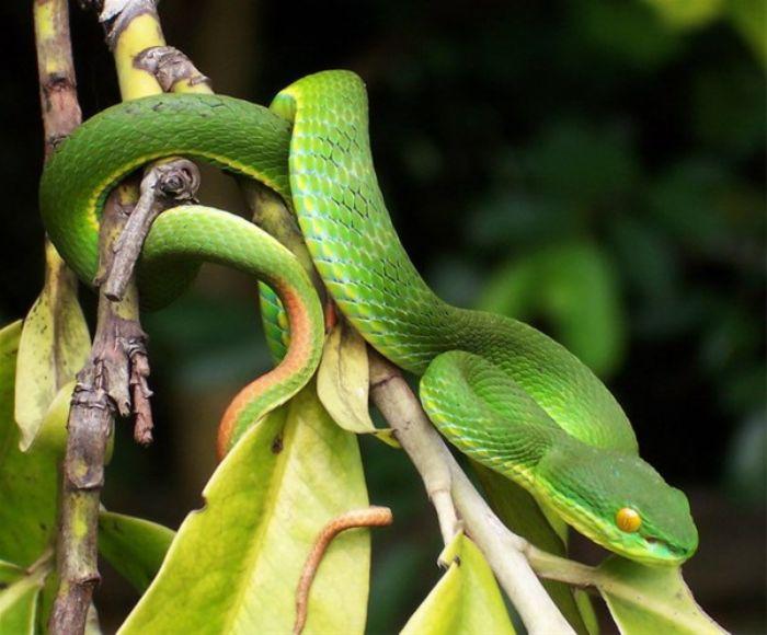 Chiêm bao thấy lạc vào rừng và bị rắn xanh cắn không nên bỏ qua cặp số 22 - 39