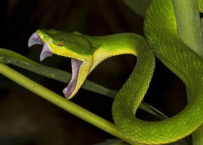 Ngủ mơ thấy con rắn màu xanh bị chặt đầu