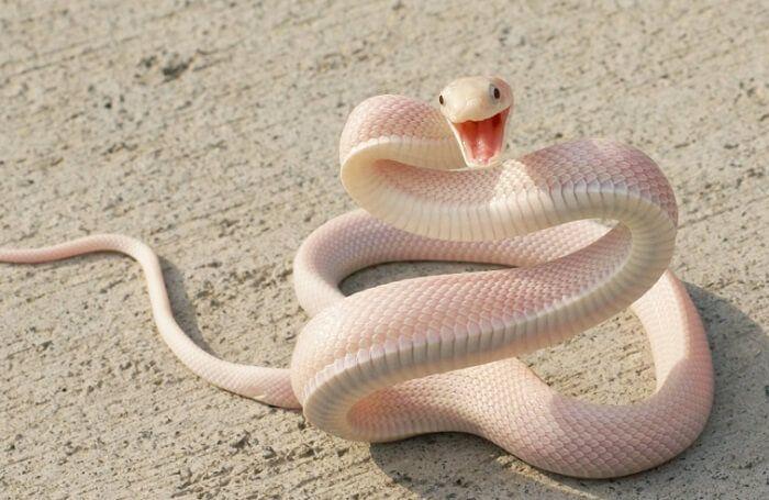 Giải mã giấc mơ thấy rắn trắng và con số may mắn khi chơi lô đề