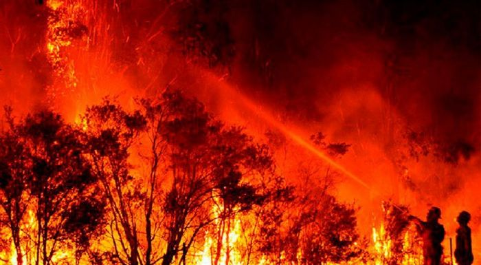 Nằm mộng thấy cháy rừng cho thấy bạn là người thích cảm giác an toàn