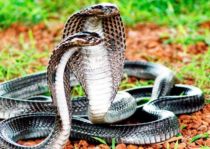 Giải mã ý nghĩa giấc mơ thấy rắn đuổi