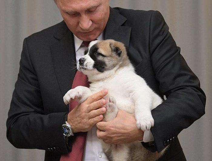Giải mã giấc mơ thấy chó con chi tiết nhất