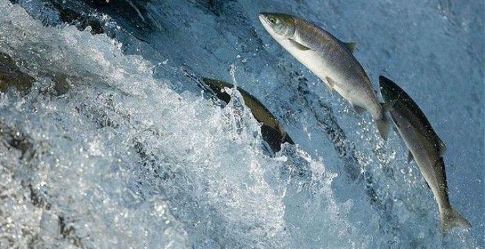 Mơ thấy cá đang bơi trong dòng nước chảy chắc hẳn bạn sẽ rất thích thú