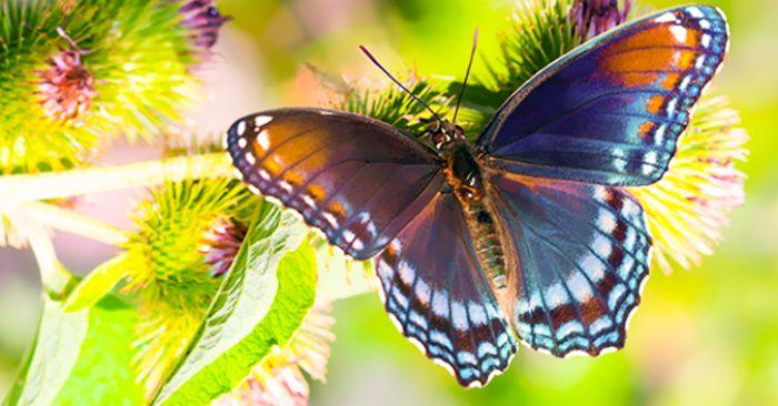 Con bướm nhiều màu sắc trong mơ cho thấy sự nghiệp của bạn đang trên đà thăng tiến