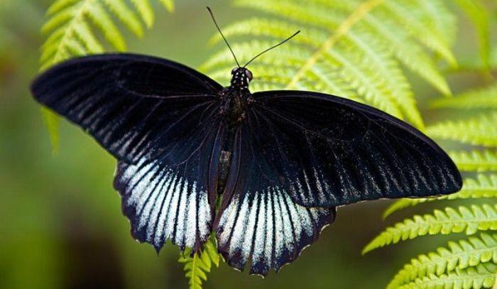 Mơ thấy con bướm là điềm lành hay dữ? Đánh con gì?