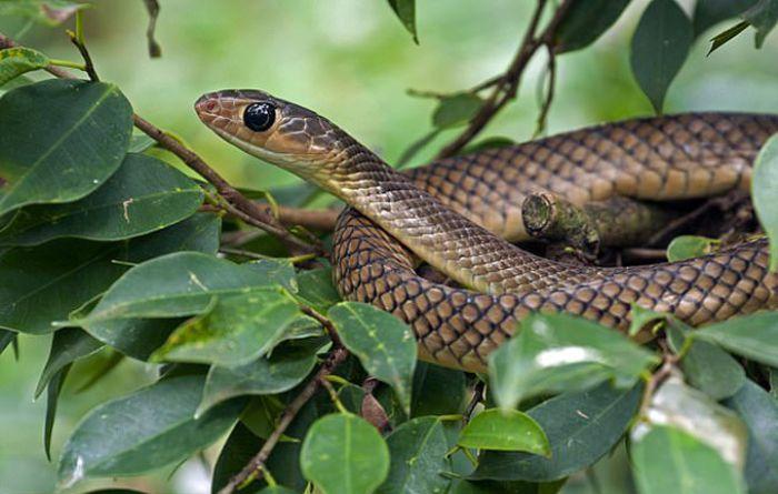 Tại sao mơ thấy rắn cắn? Đánh con gì dễ trúng?