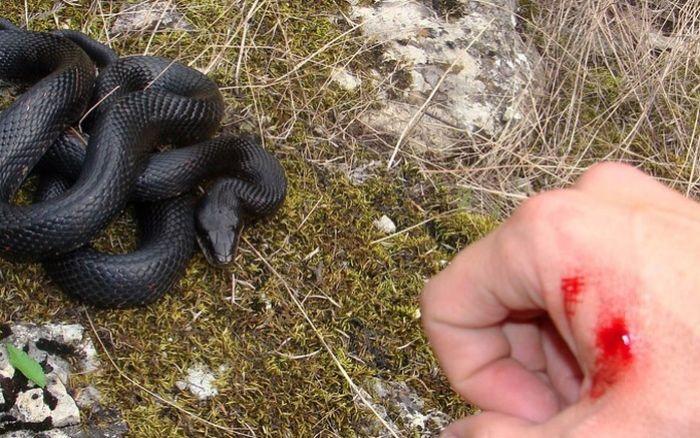 Màu đen của con rắn trong mơ cho thấy bạn sắp gặp phải tai ương