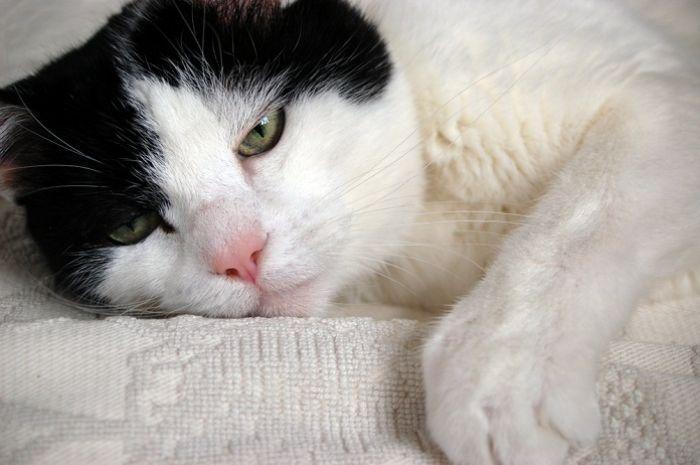 Người già chiêm bao thấy con mèo chết số mấy?