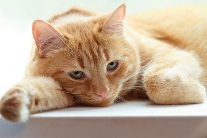 Với giấc mơ thấy mèo chết trong nhà thì gia đình bạn sắp gặp phải vận đen