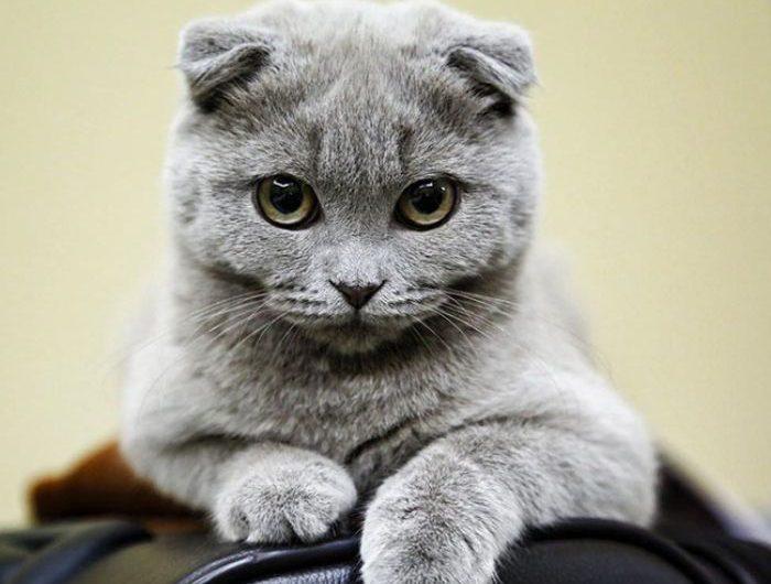 Mơ thấy mèo vào nhà đánh con gì đổi đời nhanh nhất?