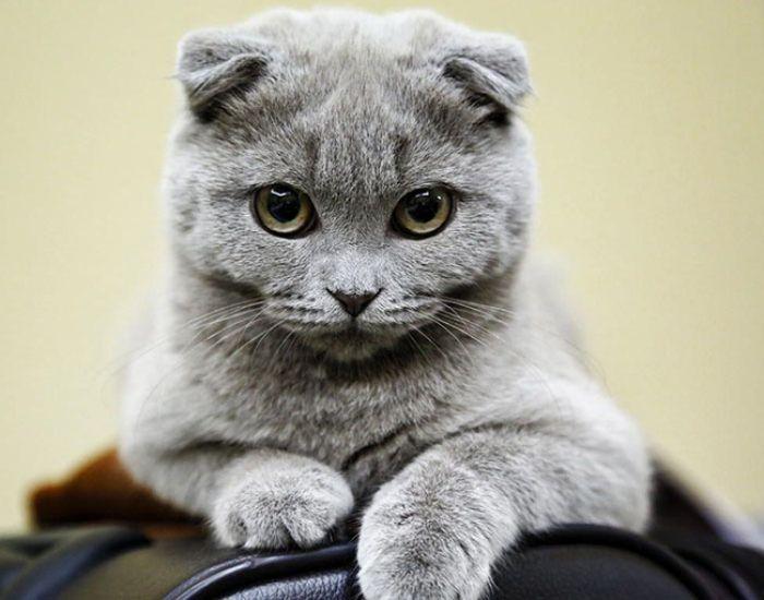 Mơ thấy mèo đực vào nhà hãy thử vận may với các số 00 - 75