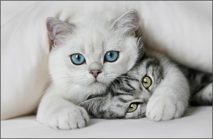 Với giấc mơ thấy mèo vào nhà trong nhà thì gia đình bạn sắp gặp phải vận đen