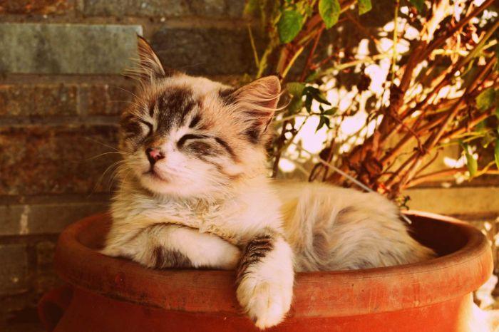 Nằm mơ thấy bố mua mèo về nhà cho thấy đầu óc bạn vô cùng hỗn loạn