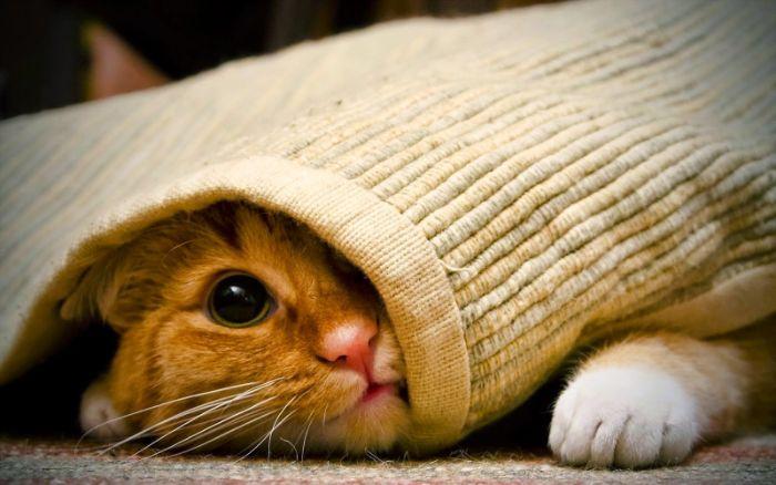 Phụ nữ mơ thấy con mèo vàng nhảy vào nhà cho thấy cuộc sống của bạn đang rất mỹ mãn