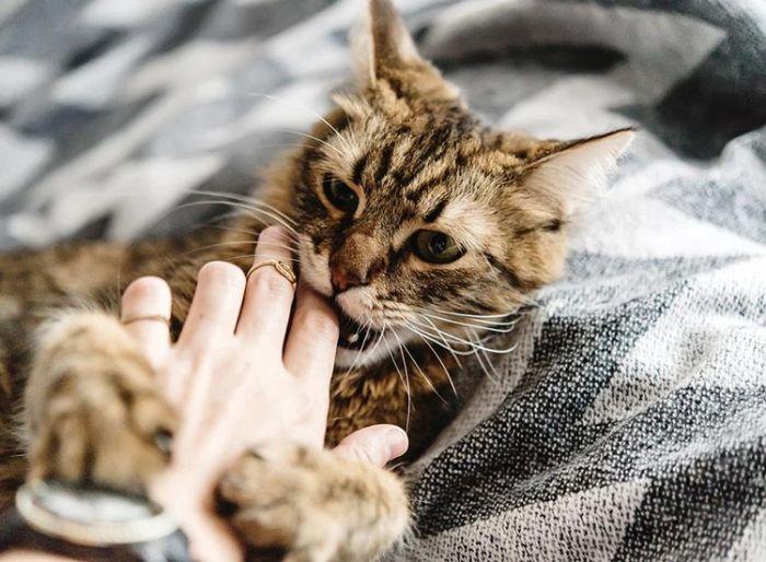Việc mơ thấy mèo cắn khiến người mơ liên tưởng ngay đến kẻ xấu