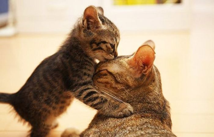 Mơ thấy nhà có mèo đẻ đánh con gì bạn hãy thử vận may với cặp số 20 - 75