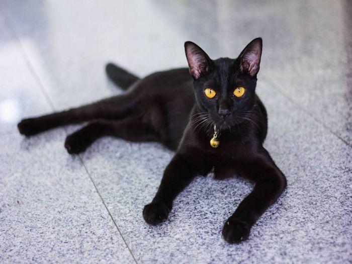 Nằm mộng thấy mèo đen nhảy qua người báo hiệu bạn sắp bị phản bội bởi người tin yêu
