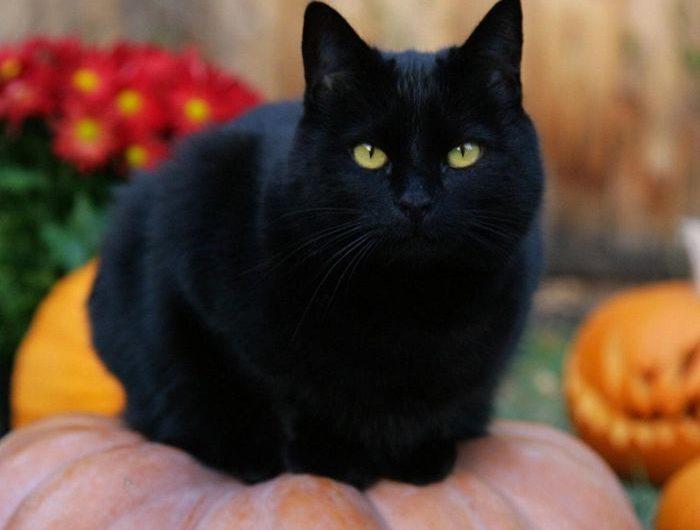 Nhìn thấy mèo đen đánh con gì? Hên hay xui?