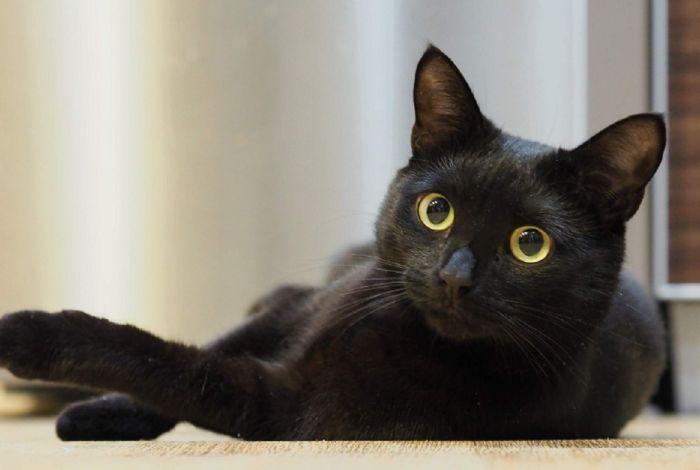 Nằm mơ thấy mình giết con mèo đen chứng tỏ chủ nhân là một người quá tham vọng