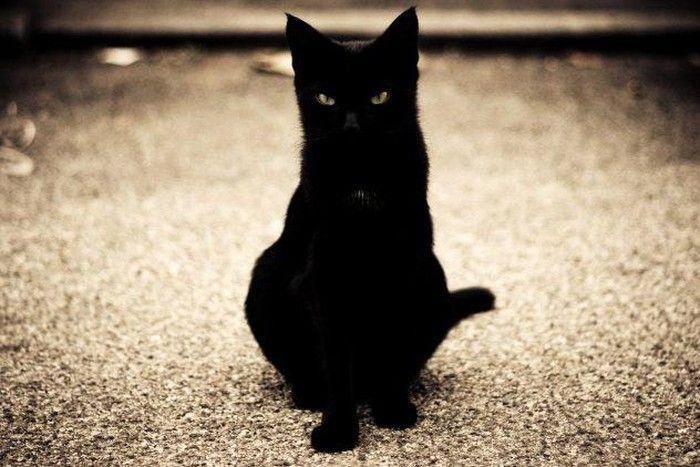 Mơ thấy dẫm phải đuôi mèo bạn hãy thử vận may với cặp số 53 - 75
