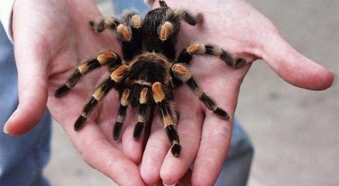Giấc mộng nhìn thấy mình bắt nhện cho thấy bạn là người khá mạnh mẽ và đáng tin
