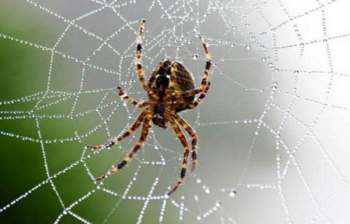 Thấy nhện ăn mồi là giấc mơ đặc biệt mà không ai cũng có may gặp được