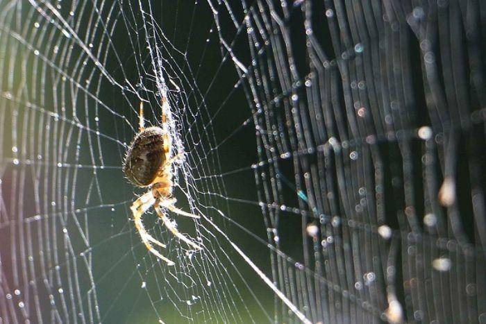 Mơ thấy nhện bị rụng chân bạn hãy thử vận may với cặp số 75 - 21