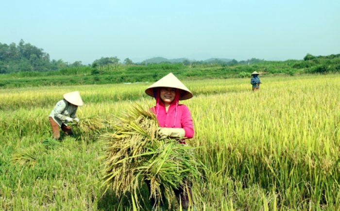 Nằm mơ thấy bó lúa sẽ đem đến cho bạn một khoản lộc vô cùng lớn