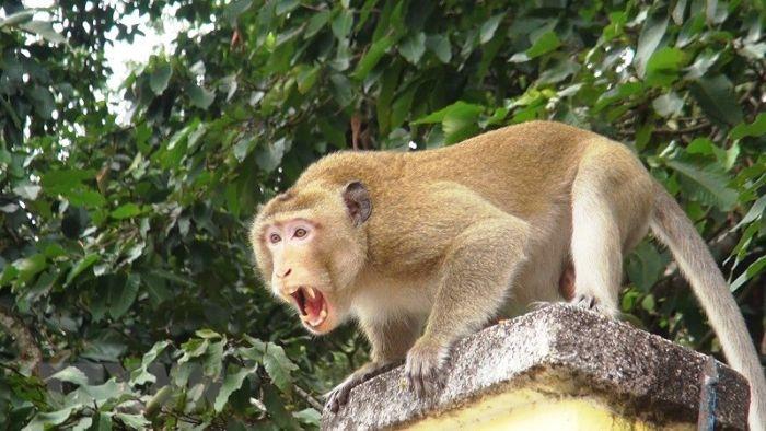 Nằm mơ thấy mình nuôi một con khỉ là chiêm bao hàm ý bản thân bạn đang có rất nhiều tâm sự