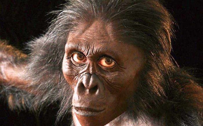 Chiêm bao thấy mình biến thành khỉ biểu hiện bạn đang che giấu một âm mưu một việc làm sai trái nào đó