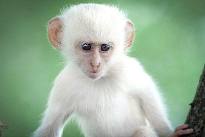 Mơ thấy con khỉ là điềm báo gì? Lành hay dữ?