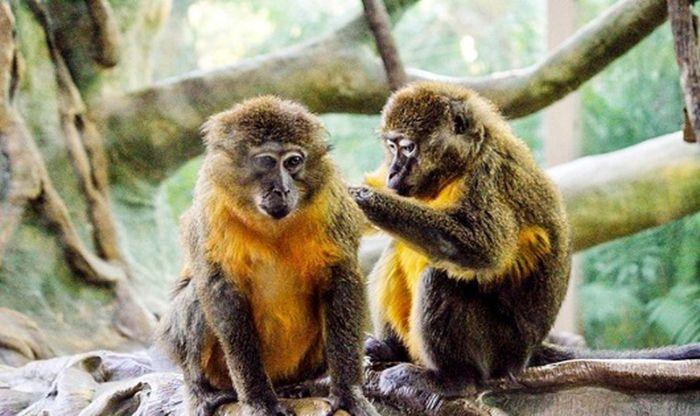 Nằm mơ thấy con khỉ leo cây hoặc leo núi báo hiệu người mơ cùng với những người bạn sắp có hiềm khích