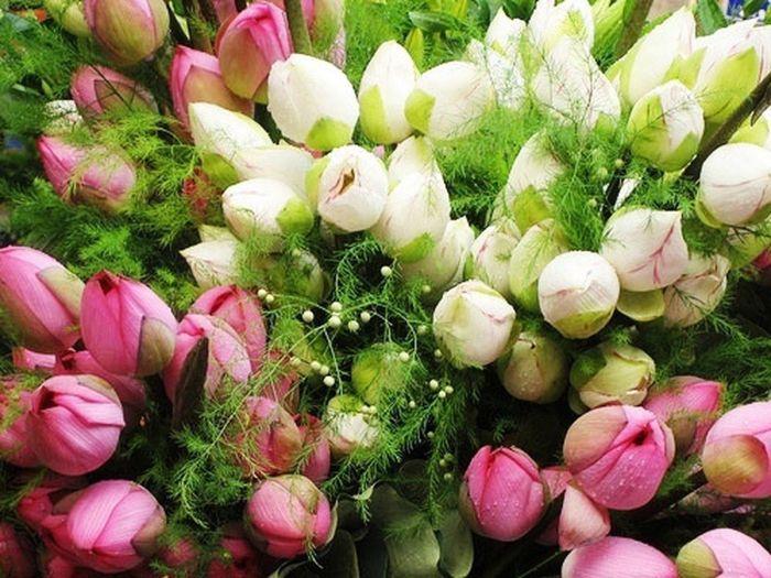 Chiêm bao thấy mình tặng hoa sen cho người khác là giấc mộng có liên quan đến chuyện tình cảm