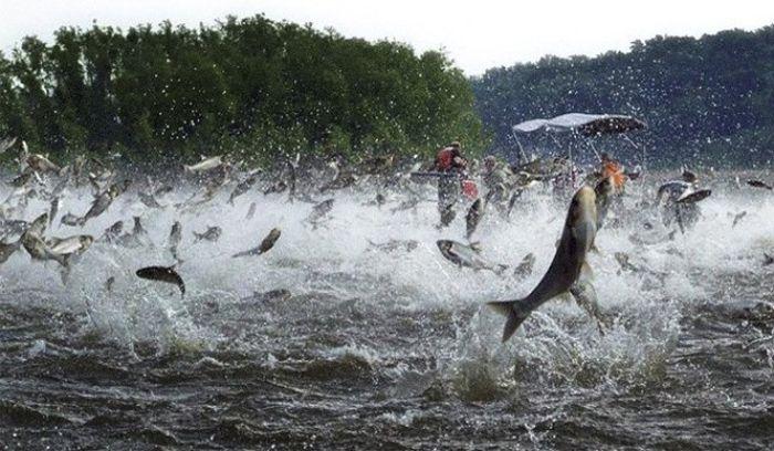 Mơ thấy cá chép đánh con gì trúng lớn?
