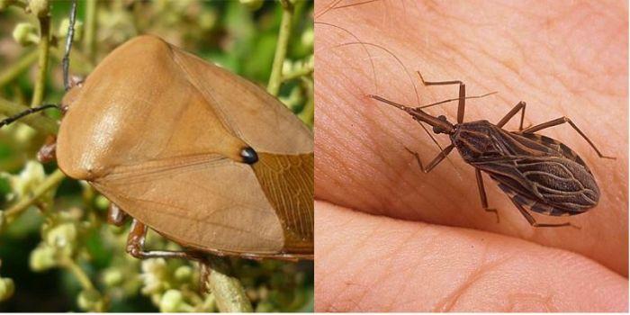 Nằm mơ thấy côn trùng bò lên người là một chiêm bao ẩn chứa ý nghĩa không tốt lành