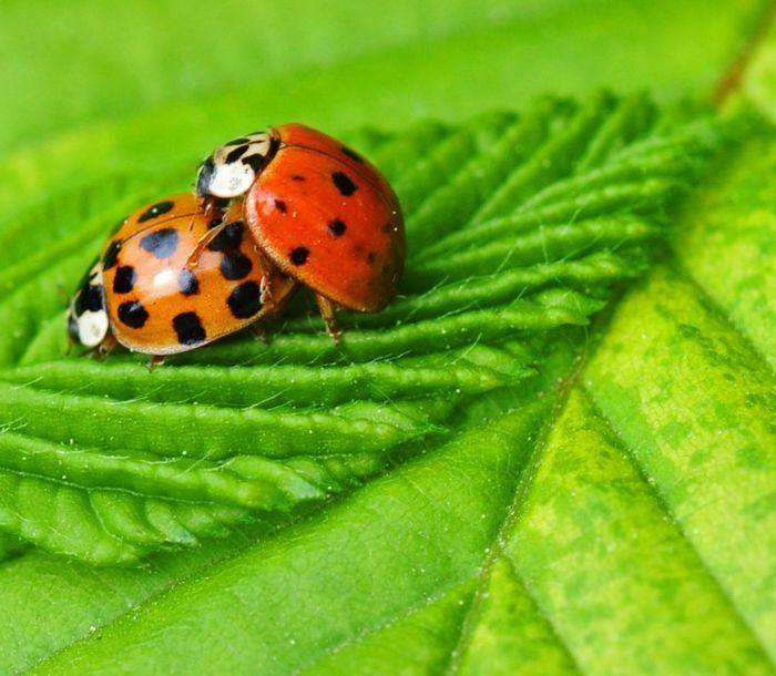 Mơ thấy bọ cánh cứng cho thấy bạn sẽ gặp một đối thủ khá mạnh trong chuyện tình cảm