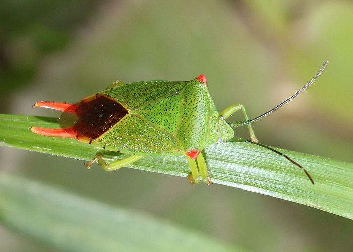 Mơ thấy bọ xít cho thấy hiện tại bạn đang sở hữu một sức khỏe vô cùng tốt và dẻo dai