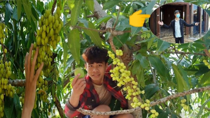 Nằm mơ thấy có kẻ trộm vào vườn hái trái cây là chiêm bao hàm ý nói về tài chính của bạn